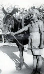 Mule Handler and his Mule